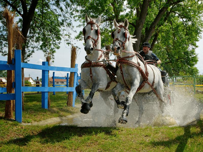 Horse competition Baile Figa